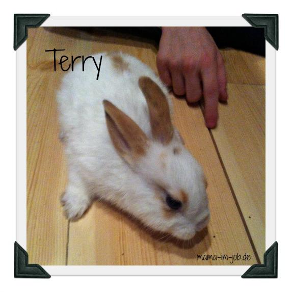 Unser Neuzugang, die Zwergkaninchendame Terry