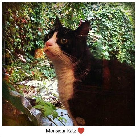 Monsieur Katz
