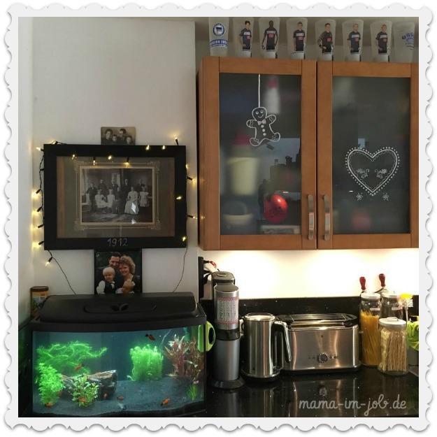 Das neue Aquarium in unserer Küche.