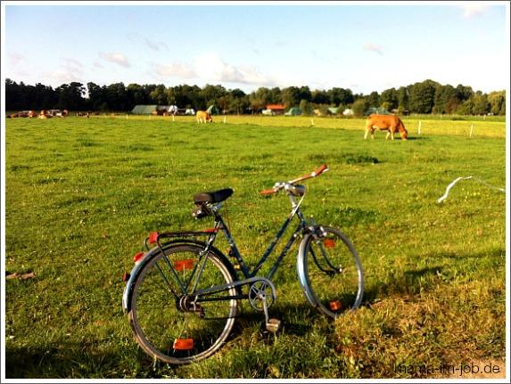 Kühe auf Heiligenseer Feldern. Foto: Petra A. Bauer 2012.