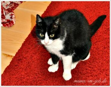 Monsieur Katz bildet einen wunderbaren Kontrast zum roten Teppich :-) Foto: Petra A. Bauer