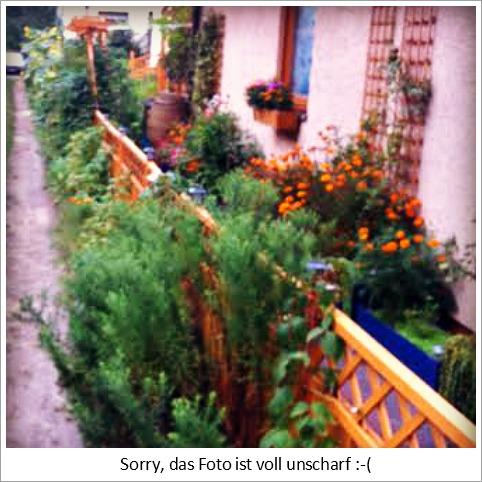 Hübscher Garten an unserer Hauptstraße. Leider Unscharf, öhem.